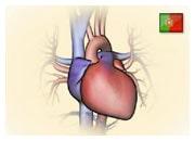 Como funciona um coração normal